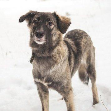 Киви - Собаки в добрые руки