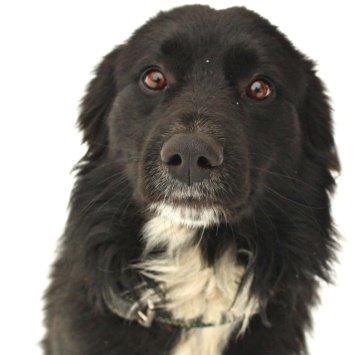 Тузик - Собаки в добрые руки