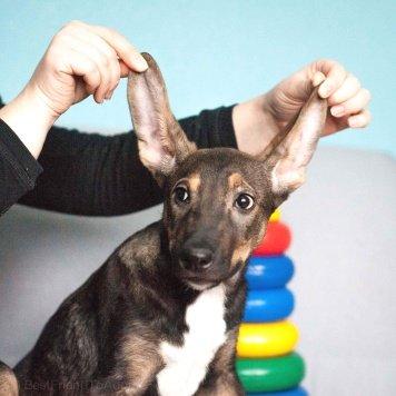 Никки - Собаки в добрые руки