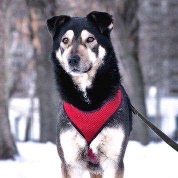 Хаски - Собаки в добрые руки