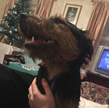 Фундук - Найденные собаки