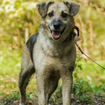 Бигли - Собаки в добрые руки