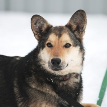Стасенька - Собаки в добрые руки