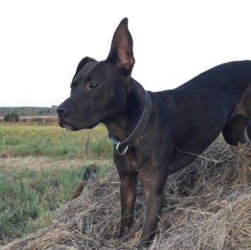 Чикита - Собаки в добрые руки