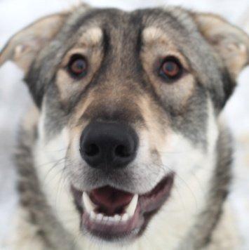 Вулфи - Собаки в добрые руки