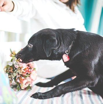 Марду - Собаки в добрые руки