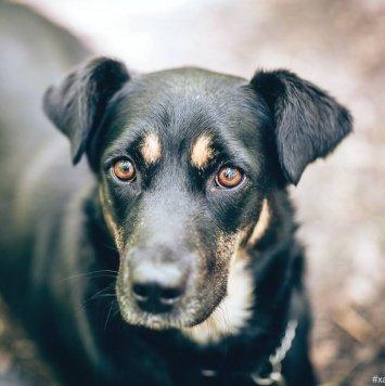 Несси - Собаки в добрые руки