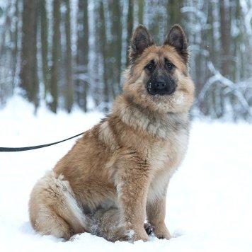 Фиона - Собаки в добрые руки