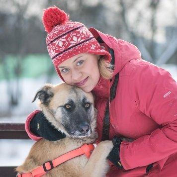 Платон - Собаки в добрые руки
