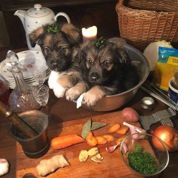Тиффани и Тимбо - Собаки в добрые руки