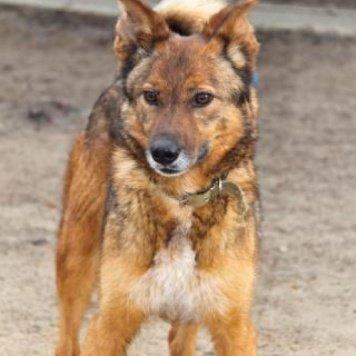 Шпротик - Собаки в добрые руки