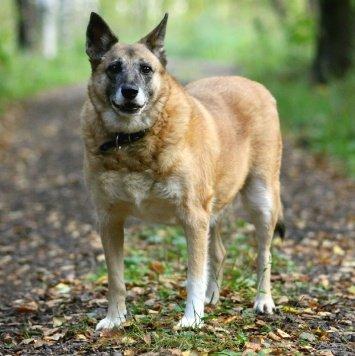 Злата - Собаки в добрые руки