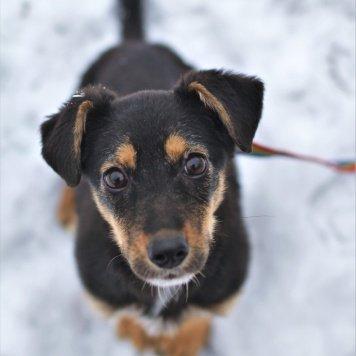 Хильда - Собаки в добрые руки