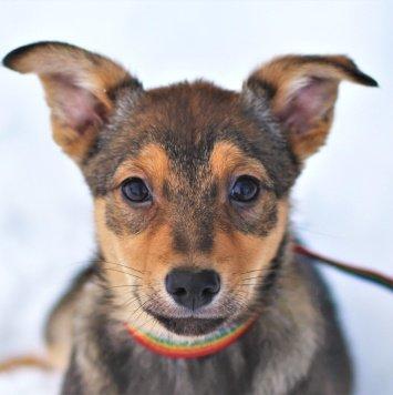 Хоста - Собаки в добрые руки