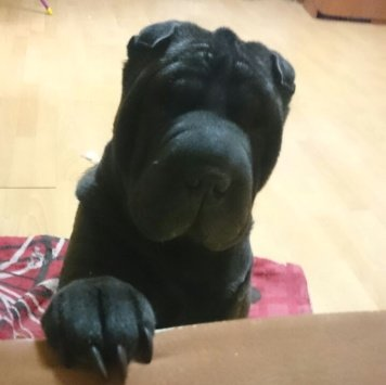 Пади - Собаки в добрые руки