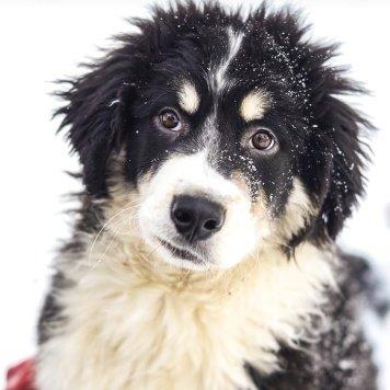 Барбосик - Собаки в добрые руки