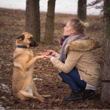 Фокси - Собаки в добрые руки