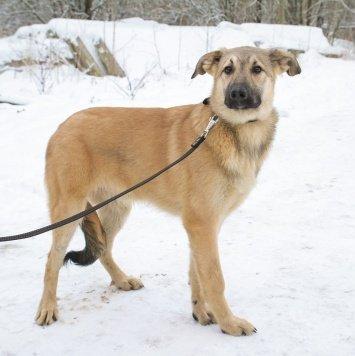 Варт - Собаки в добрые руки