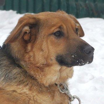 Габриэлла - Собаки в добрые руки