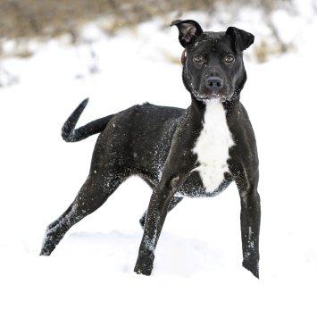 Шерон - Собаки в добрые руки