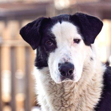 Балу - Собаки в добрые руки