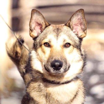 Джонник - Собаки в добрые руки