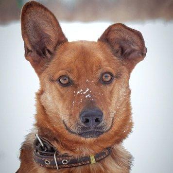 Льюис - Собаки в добрые руки