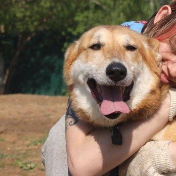 Фоксик - Собаки в добрые руки