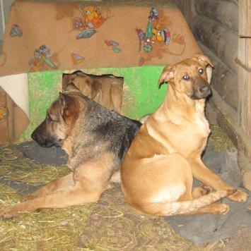 Герда и Джойка - Собаки в добрые руки