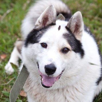 Майло - Собаки в добрые руки