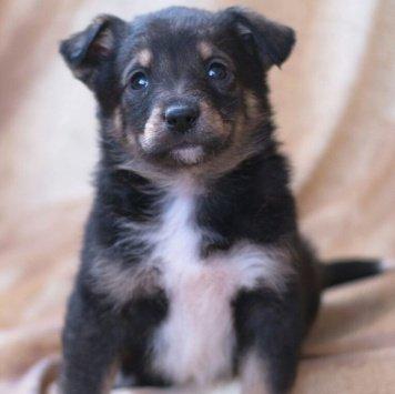 Очаровашки-щенки - Собаки в добрые руки