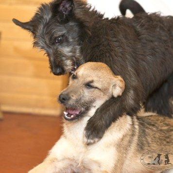 Рыжик и Клякса - Собаки в добрые руки