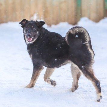 Ежевичка - Собаки в добрые руки