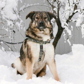 Бонечка - Собаки в добрые руки