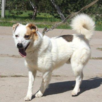 Алый - Собаки в добрые руки