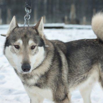 Саян - Собаки в добрые руки