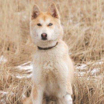 Майдан - Собаки в добрые руки