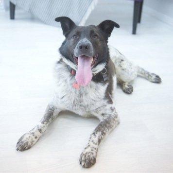 Дарси - Собаки в добрые руки