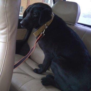 Мила - Найденные собаки