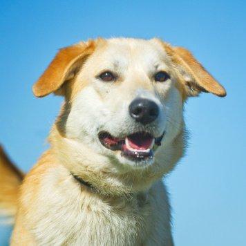 Макар - Собаки в добрые руки
