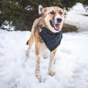 Понча - Собаки в добрые руки