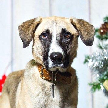 Ратибор - Собаки в добрые руки