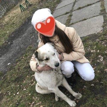 Шарик - Собаки в добрые руки
