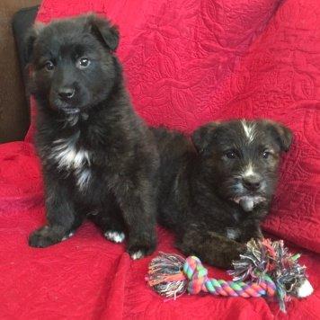 Миша и Гриша - Собаки в добрые руки