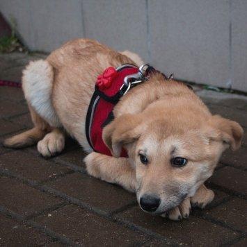 Бантик - Собаки в добрые руки