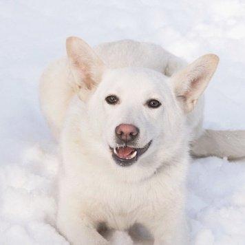 Тала - Собаки в добрые руки