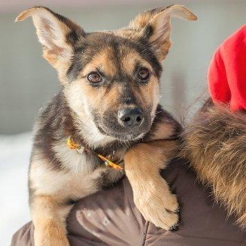 Бэрри - Собаки в добрые руки