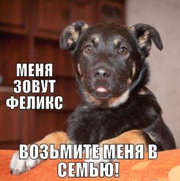 Феликс - Собаки в добрые руки