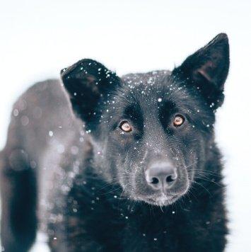 Черныш - Собаки в добрые руки