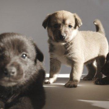 Плюшевые щенки - Собаки в добрые руки